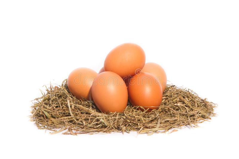 Chicken eggs in a nest on white background royalty free stock image