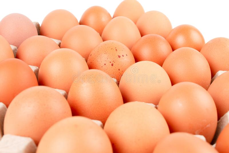 Chicken Eggs In paper container tray box. stock photos