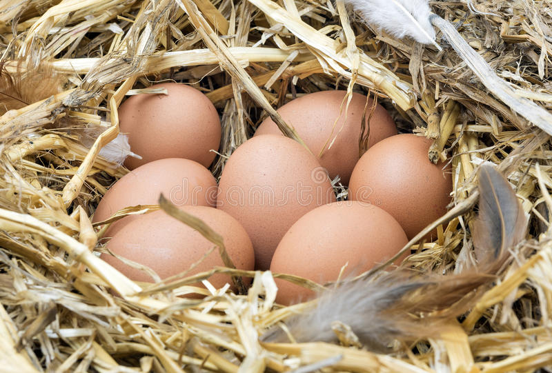Chicken eggs in straw nest. stock photo