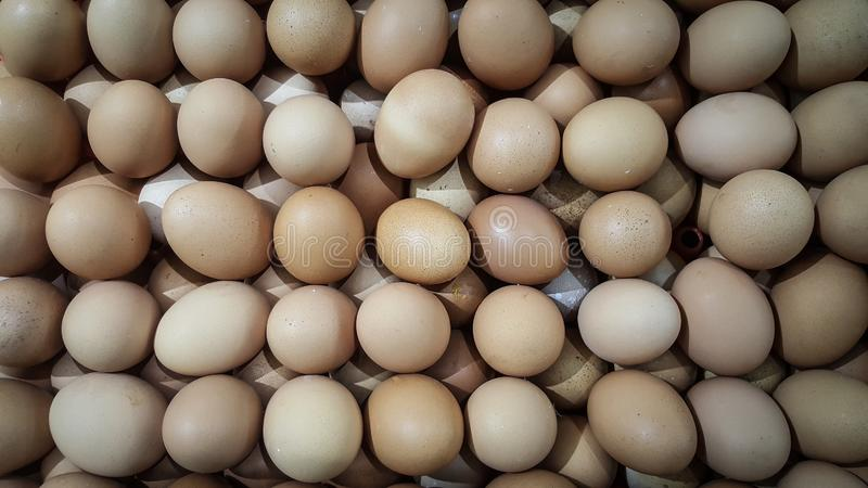 Chicken Eggs Are Very Much Photographed From Near Fresh ...
