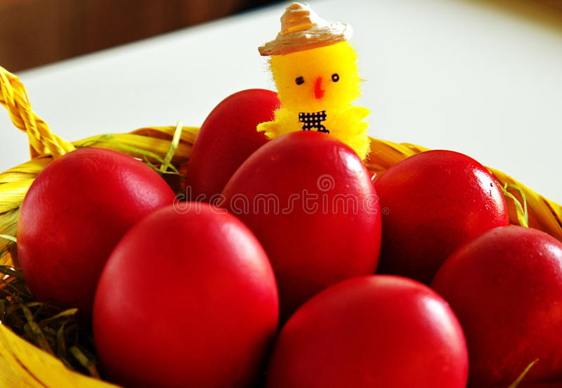 Chicken on Ester red eggs royalty free stock photography