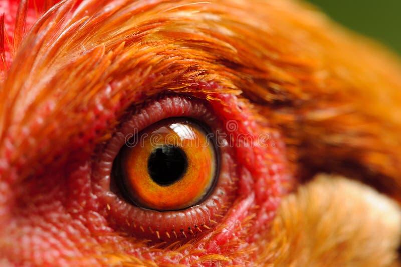 Chicken Eye Macro. A macro shot of a chicken eye stock photos