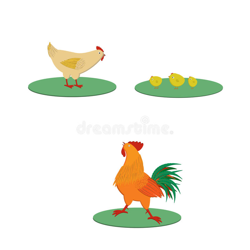 Chicken family stock images
