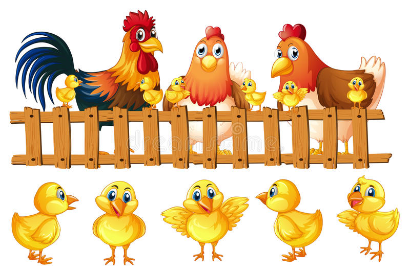 Chicken family with five little chicks. Illustration royalty free illustration