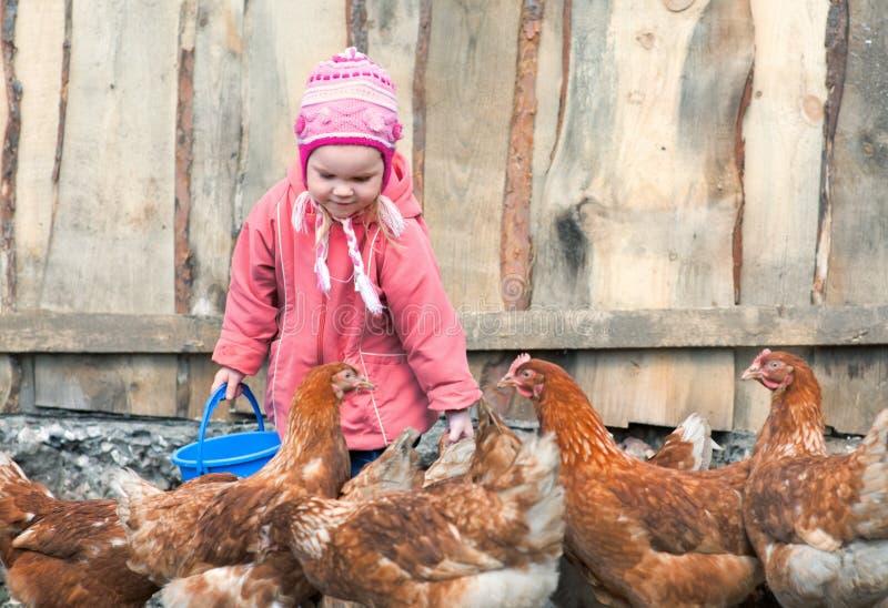 Chicken farm stock photography