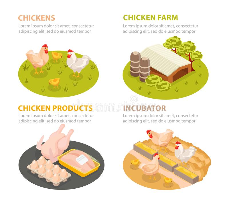 Chicken Farm Compositions Set royalty free illustration
