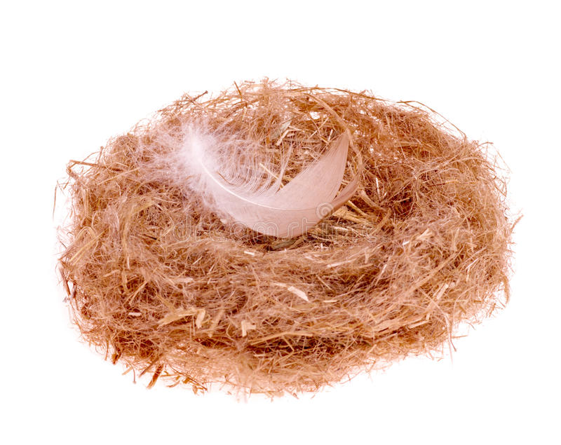 Chicken feather in the nest