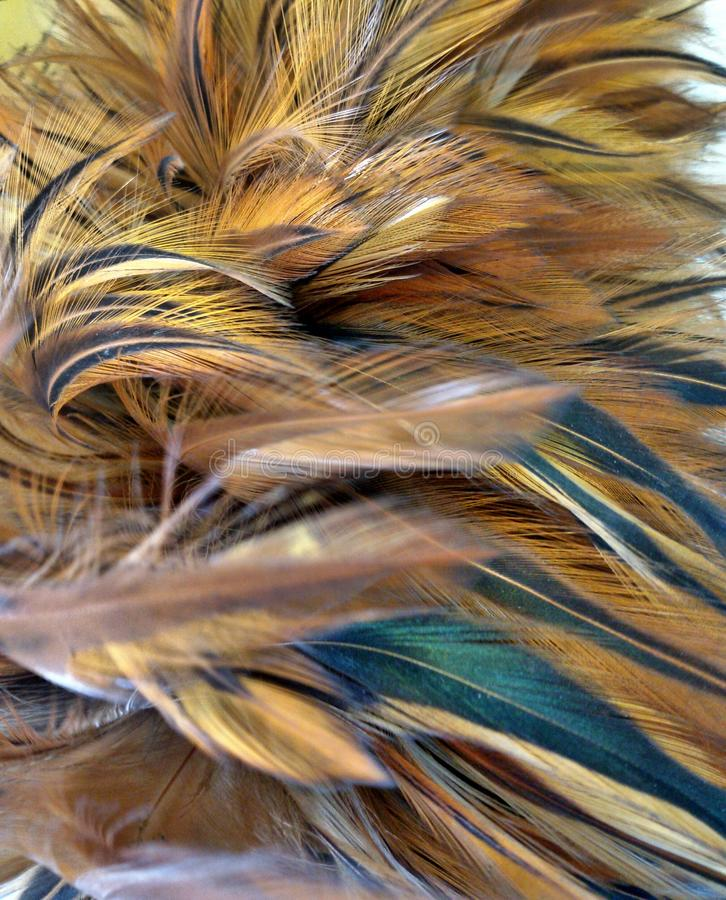 Chicken feather royalty free stock photo