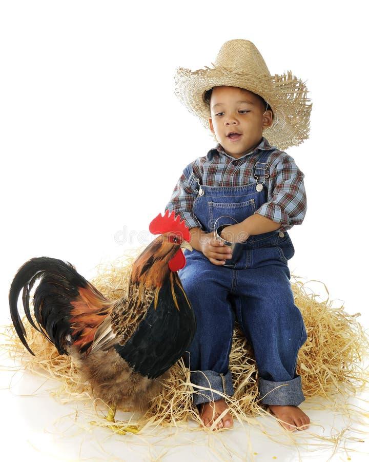 Chicken Feeder royalty free stock photo