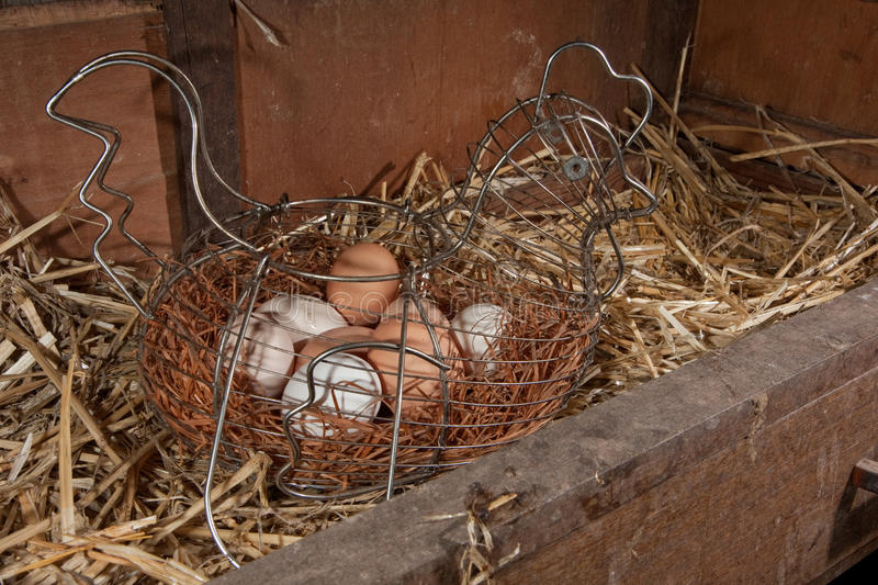Chicken freerange organic eggs in wire basket. Chicken eggs in chicken shaped basket in nesting box royalty free stock images