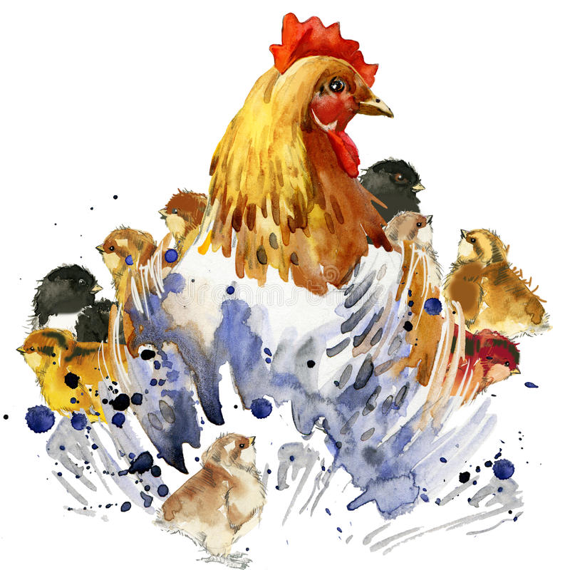 Chicken hen and chickens T-shirt graphics, chicken family illustration with splash watercolor textured background. illustration wa. Chicken hen and chickens T royalty free illustration