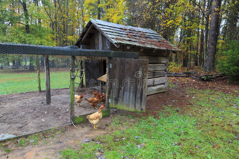 Chicken House. Chickens in a chicken house on a farm royalty free stock photos