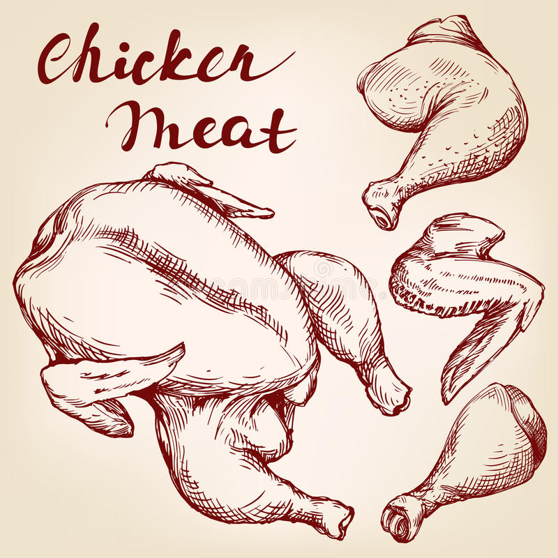 Chicken meat set hand drawn vector realistic sketch royalty free illustration