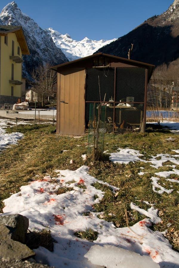 Download Chicken run stock photo. Image of blood, snow, chicken - 12564564