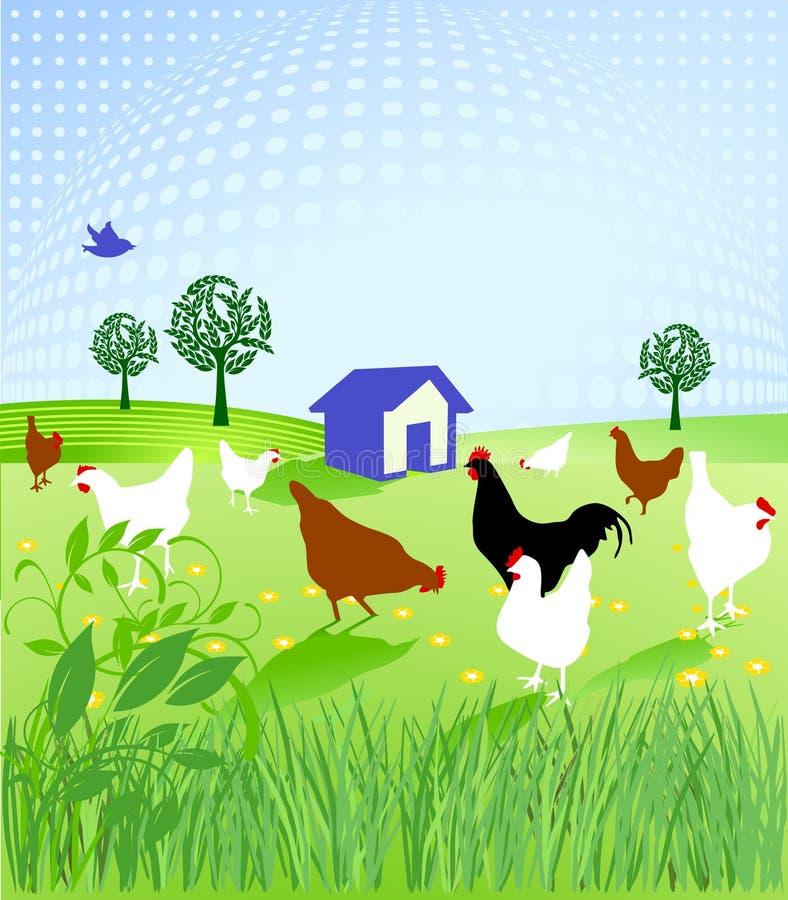 Download Chicken run stock vector. Image of farm, bird, chicken - 13796571