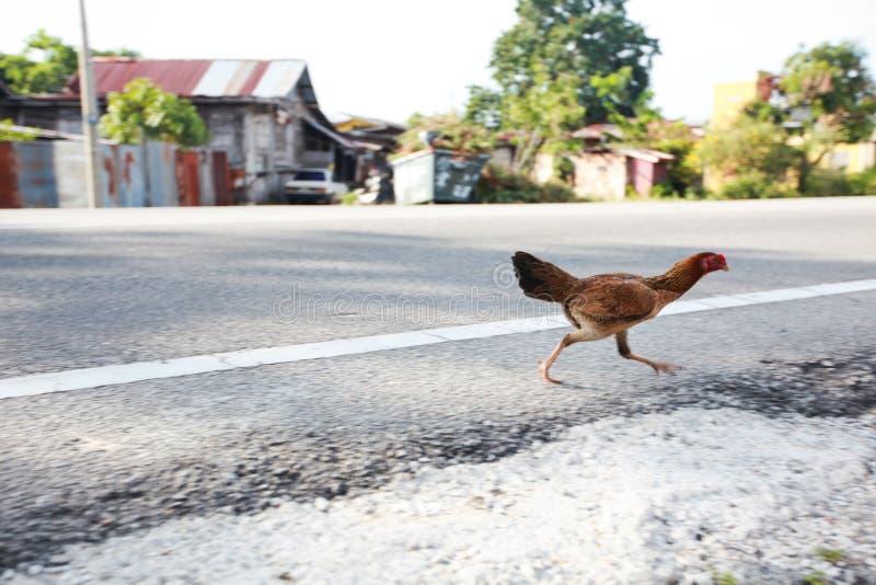 Chicken Running stock photos