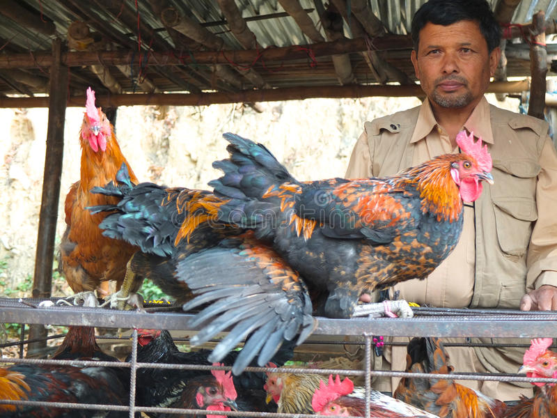 Download Chicken seller in Nepal editorial photo. Image of temple - 31325126