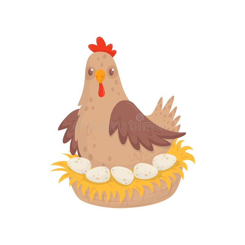 Chicken sitting in nest with eggs. Domestic fowl. Poultry farming theme. Flat vector for advertising poster or banner royalty free illustration