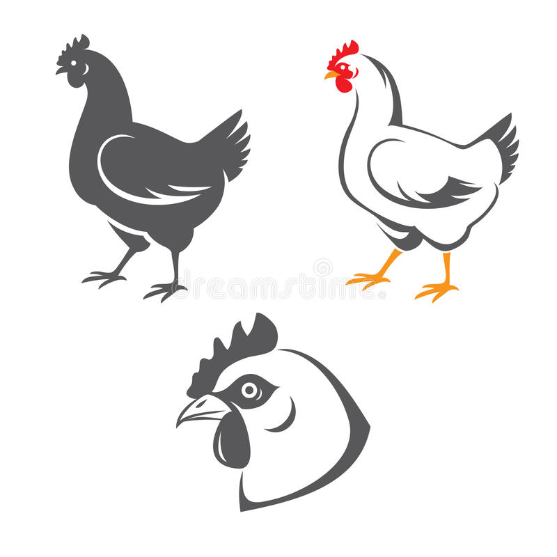 Chicken. Tree hen (chicken) icons: head and two silhouettes in vector