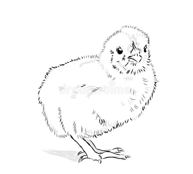 Chicken Vector black and white royalty free illustration
