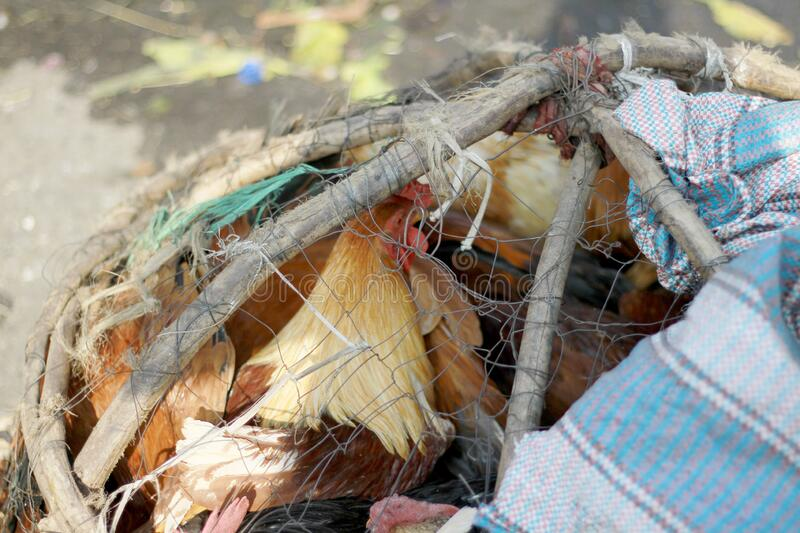 Chicken in a wire meshed cage. At Merkato Market in Addis Ababa Ethiopia stock photos