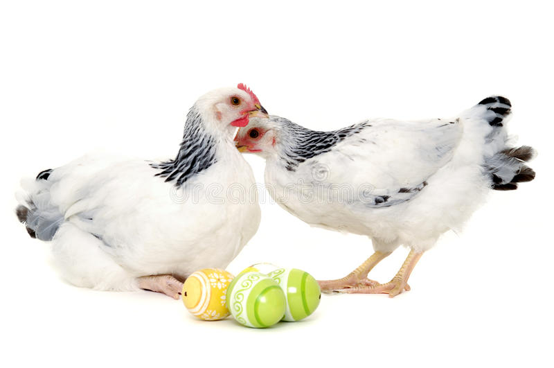 Download Chickens and easter eggs stock image. Image of life, animals - 22718879