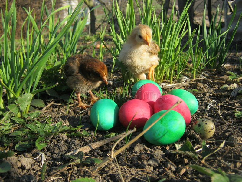 Chickens and easter eggs stock photography