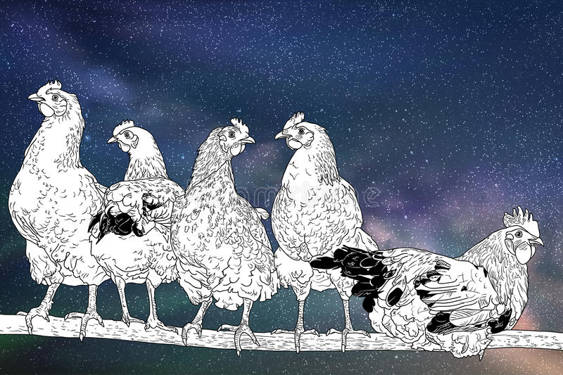 Chickens on perch. Flock of poultry under night starry sky stock illustration