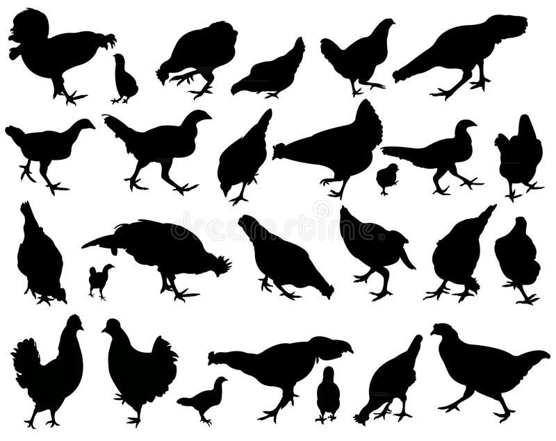 Chickens and roosters, silhouettes vector vector illustration