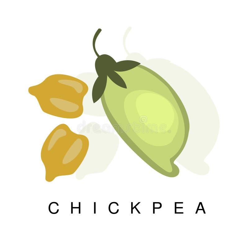 Chickpea strąk, Infographic ilustracja Z Realistyczną pelengów Legumes rośliną I Swój imię, ilustracja wektor