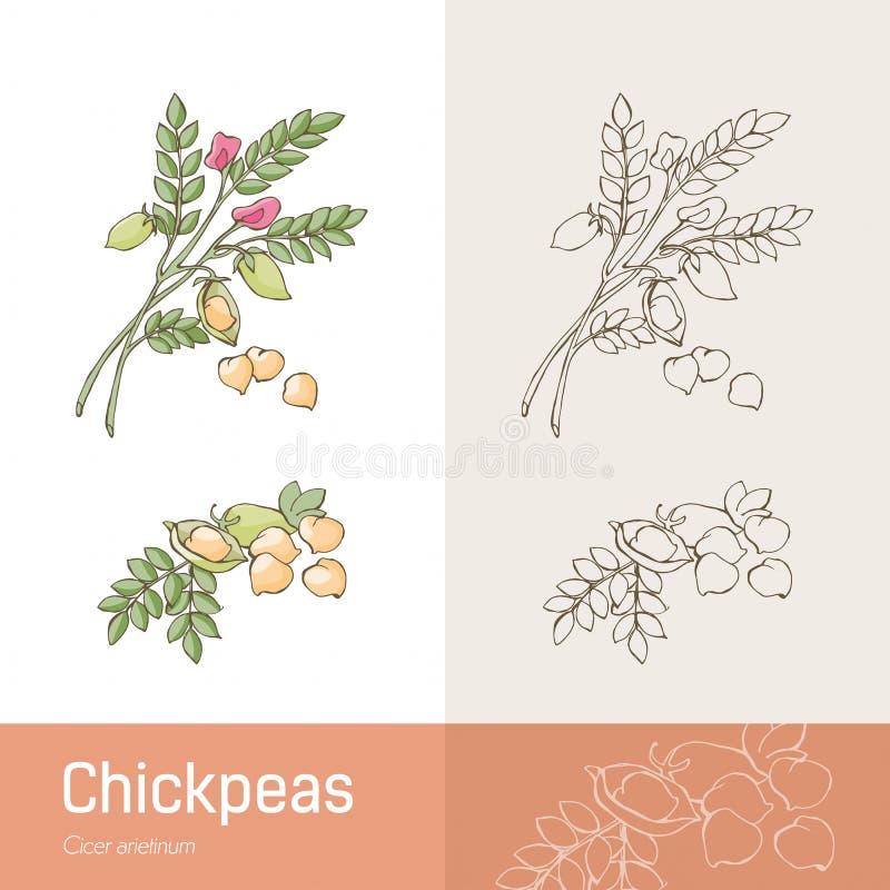 chickpeas ilustracji