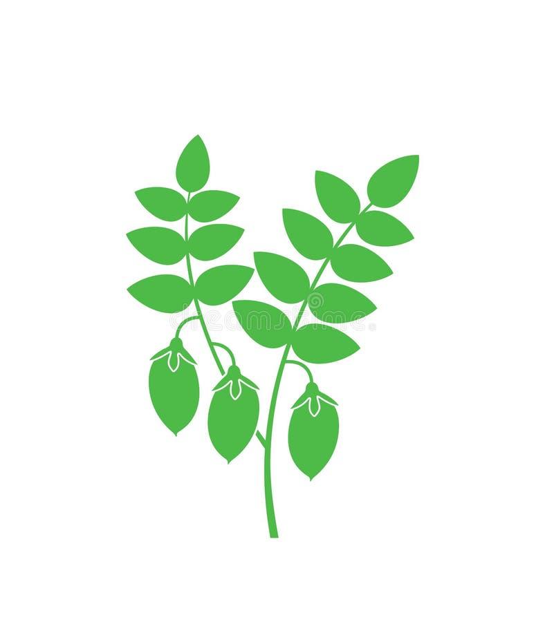 Chickpeas roślina Odosobneni chickpeas na białym tle royalty ilustracja