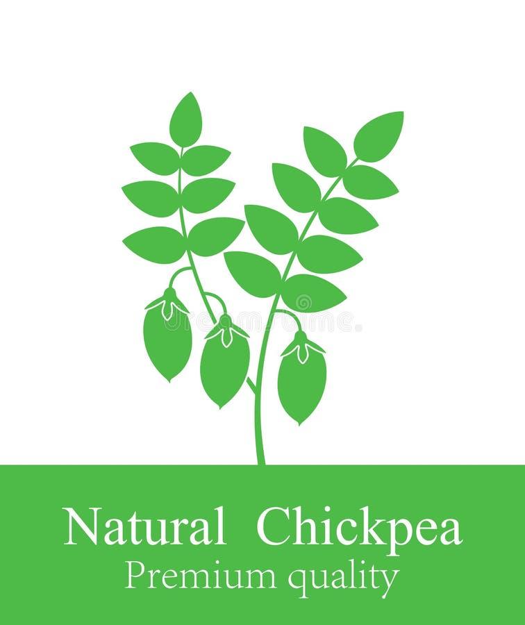 Chickpeas roślina Odosobneni chickpeas na białym tle ilustracja wektor