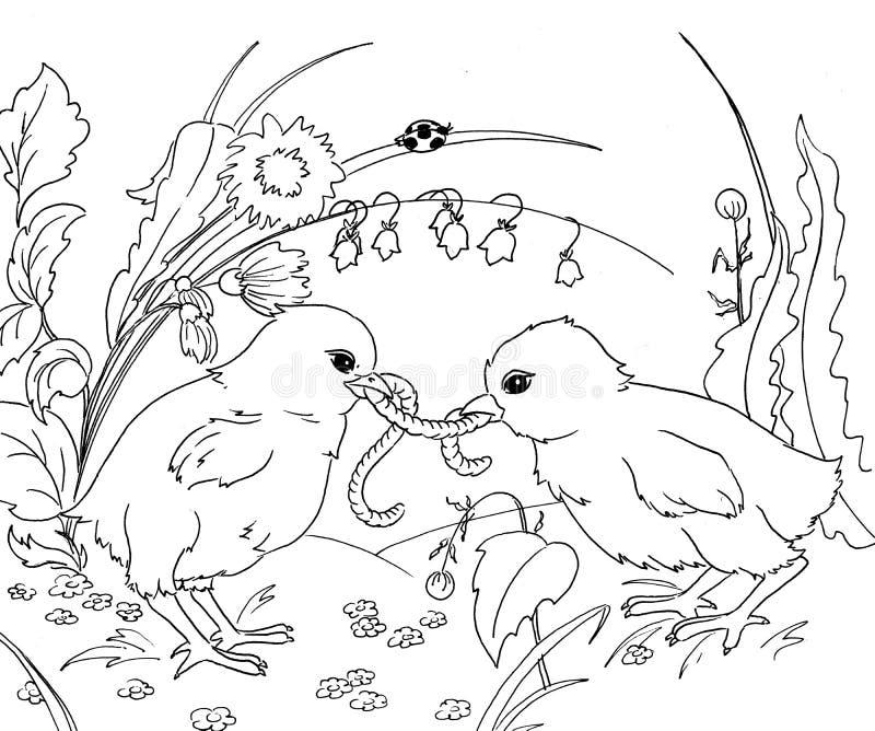 Chicks. Two chicks sharing a warm vector illustration