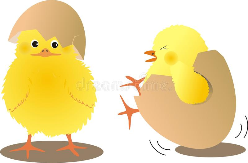 Chicks with eggs. Two chicks with eggs shells royalty free illustration