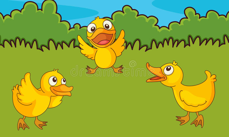 Download Chicks In A Field Stock Image - Image: 24746531