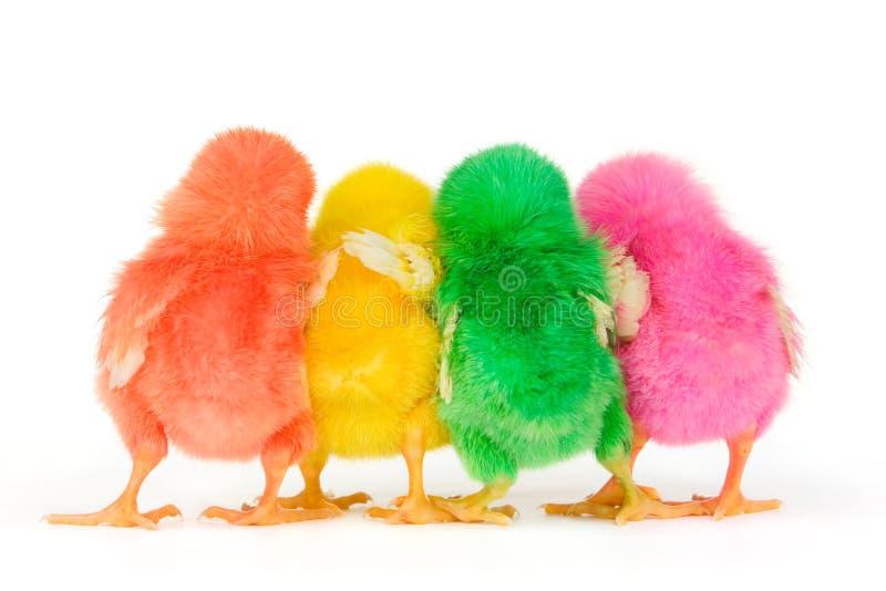 Download Chicks In Secret Discussion Stock Illustration - Illustration: 5609096