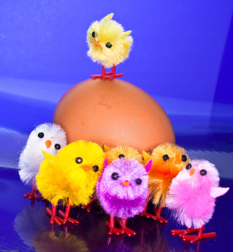 Download Chicks on top and in front stock image. Image of spring - 13524849