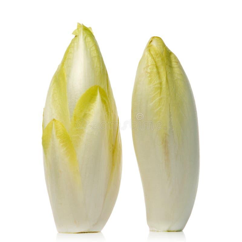 Free Chicory Stock Photo - 2480530