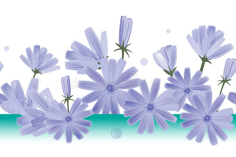 Chicory flowers vector seamless pattern. Design for wallpapers, textile, or chicory extract packaging. Chicory flowers vector seamless pattern. Design for stock illustration