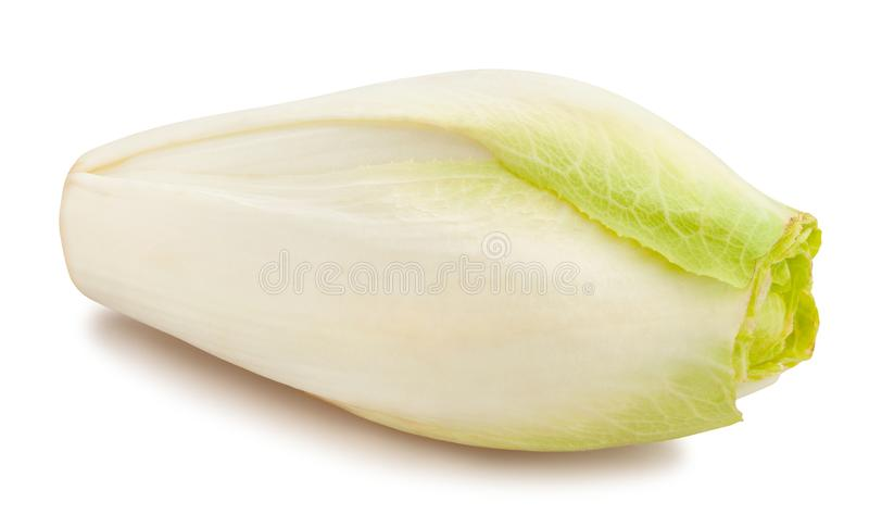Chicory royalty free stock photography