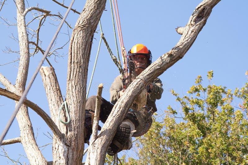 Chicote de fios de segurança desgastando do homem em uma árvore imagens de stock