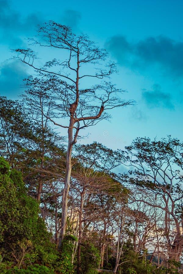 Chidiyatapu-Wald lizenzfreies stockfoto