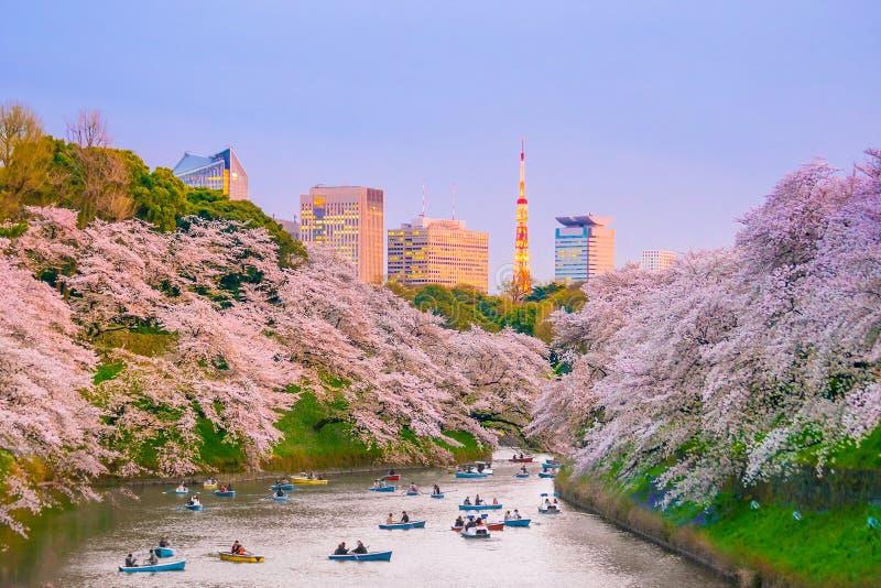 Chidorigafuchi park with full bloom sakura. In Tokyo, Japan royalty free stock photography