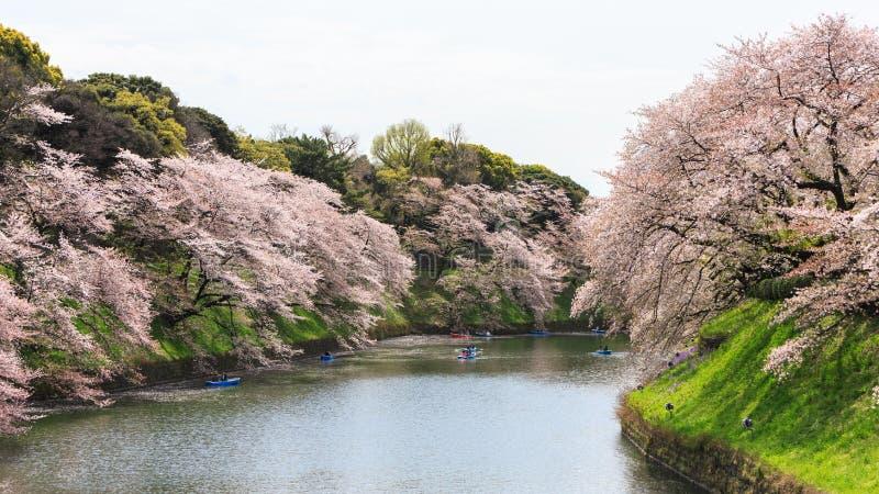 Chidorigafuchipark tijdens de lentetijd royalty-vrije stock foto's