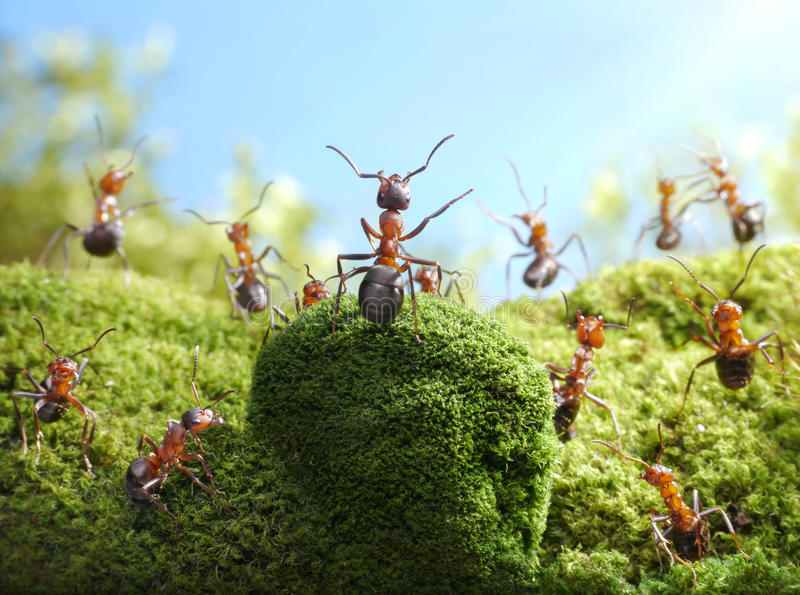 Chief of redskin ants, statement, ant tales stock images