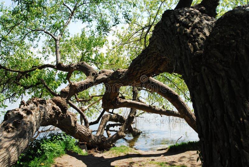 chiemsee drzewo jeziora. obraz stock