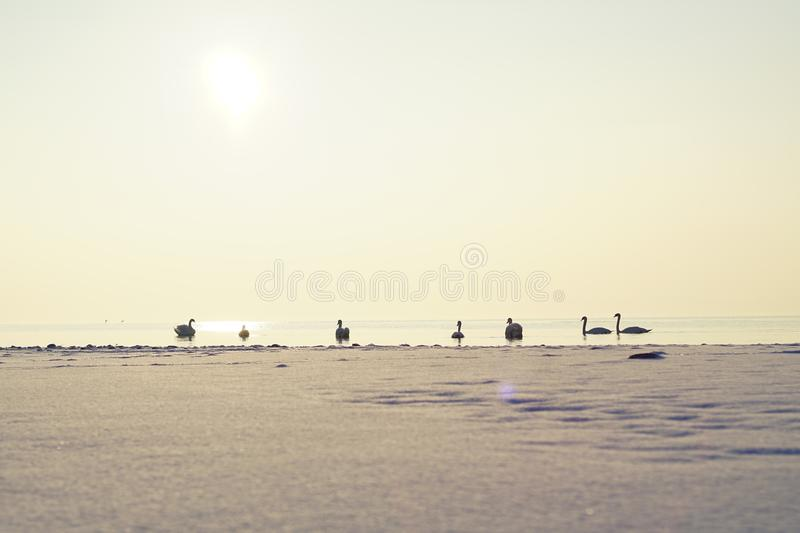 Chiemsee in winter in bavaria stock photos