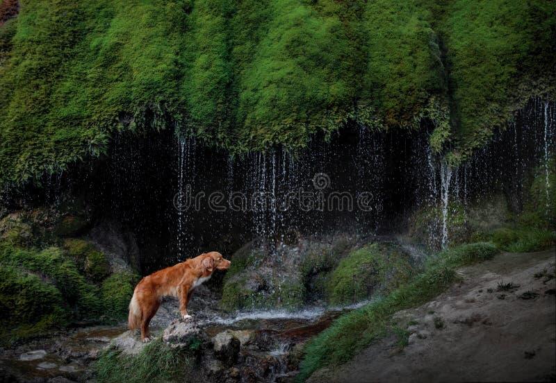 Chien à la cascade Animal familier sur la nature outside Peu de profil de crabot de fleuve image stock