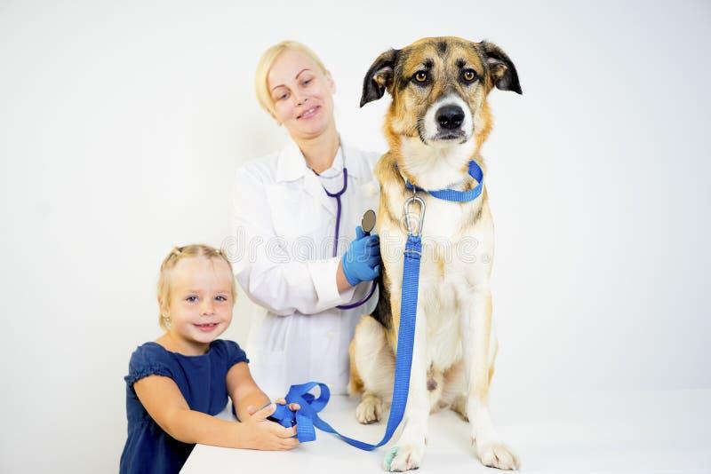 Chien à un vétérinaire photo libre de droits